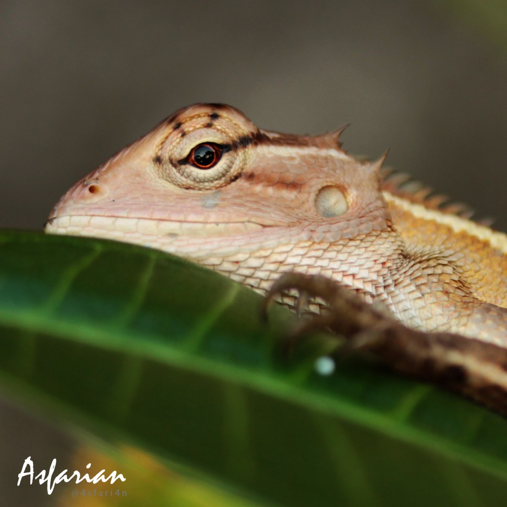 My Photography - The Reptile eyes contains the whole world